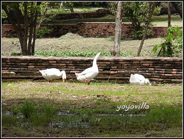 泰國 大城 臥佛 Lokayasutha, Ayutthaya, Thailand
