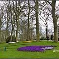 荷蘭 鬱金香花園 庫肯霍夫 Keukenhof, Netherlands