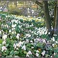 德國四月是賞花的季節 Hamburg, Germany