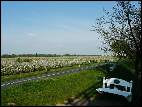 Altes Land, 德國易北河岸 Elbe,Germany