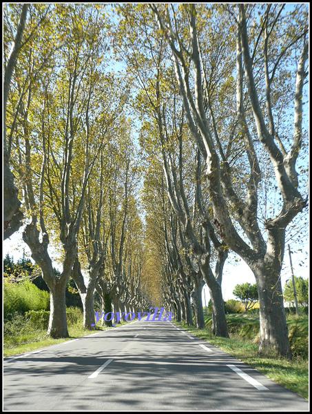 法國 普羅旺斯 聖雷米 St-Remy-de-Provence, France