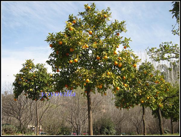 [西班牙] 安達盧西亞的春天 Andalusien, Spain