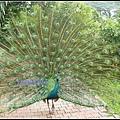 馬來西亞 吉隆坡 鳥園 Bird Park, Kualu Lumpur, Malaysia