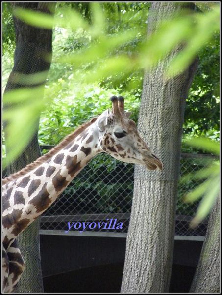 德國 漢堡 哈根貝克動物園 Tierpark Hagenbeck, Hamburg, Deutchland