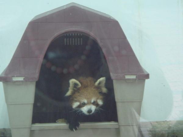 小丑 壽山動物園