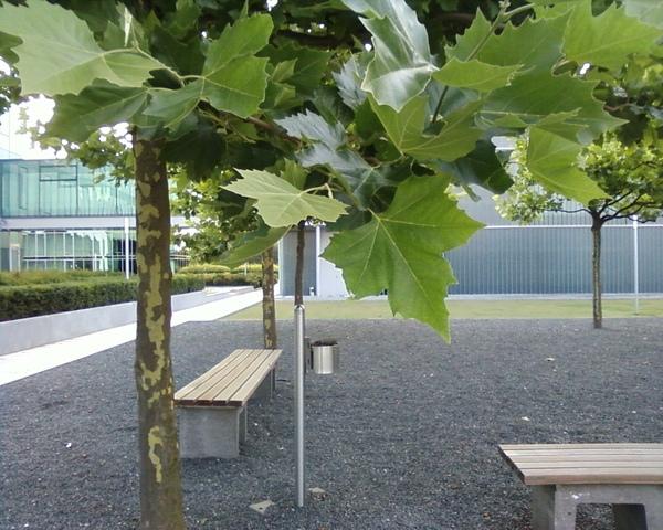 MPI後面的空地跟長椅.jpg