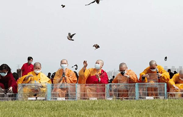 大放生——-鳥兒們榮耀的皈依三寶,奔向自由_01.png