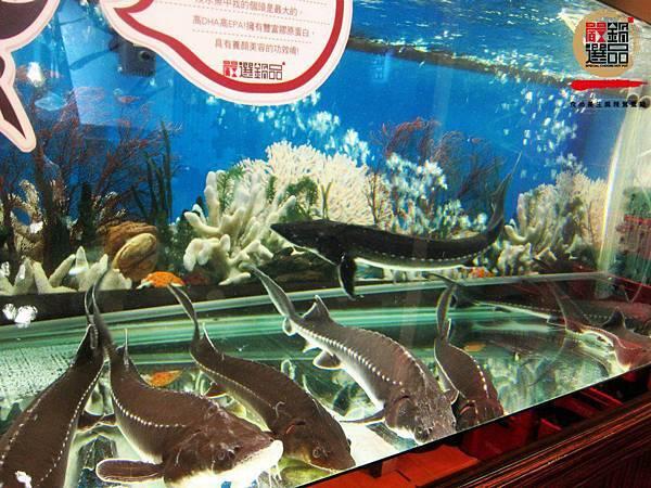 新鮮食材是我們的要求, 運用儲水桶及冷卻系統的技術 成為台北市中心僅有的鱘龍魚活體養殖店家  所以不論是用來熬湯的鱘龍魚軟骨⋯⋯