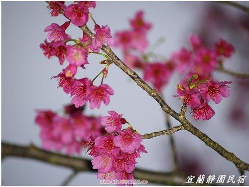 九寮溪生態步道14.jpg