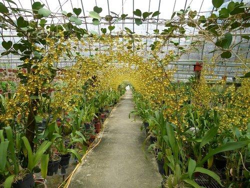 花卉農場3