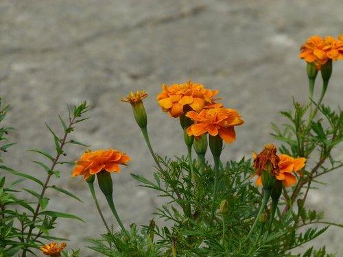 花卉農場10