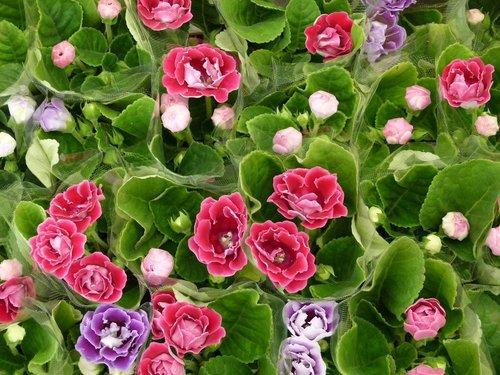 花卉農場13