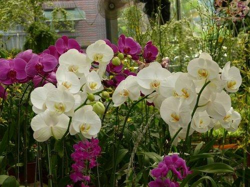 花卉農場17