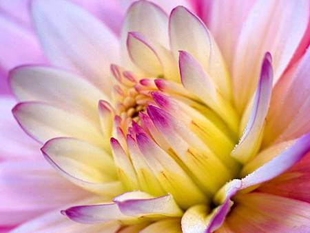 Flower-Wallpaper-flowers-249402_1024_768