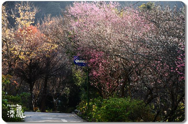 武陵農場_001_15P01