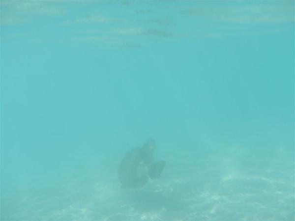 水很乾淨...