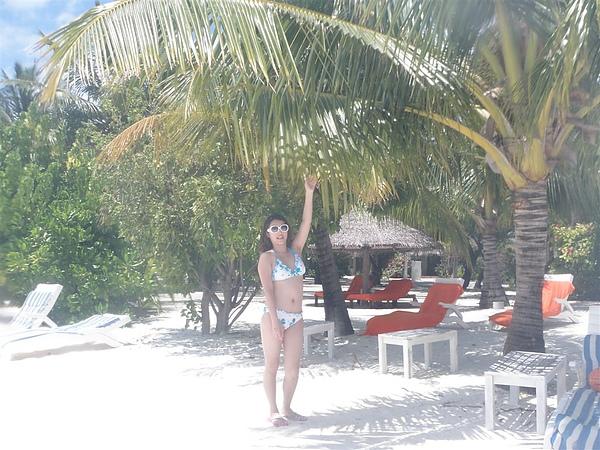 我們在尋找漂亮的椰子樹