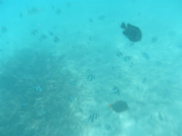 還真給他找到ㄧ個珊瑚礁   很多魚喔