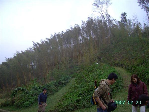 20070220-綠光森林竹林1.JPG