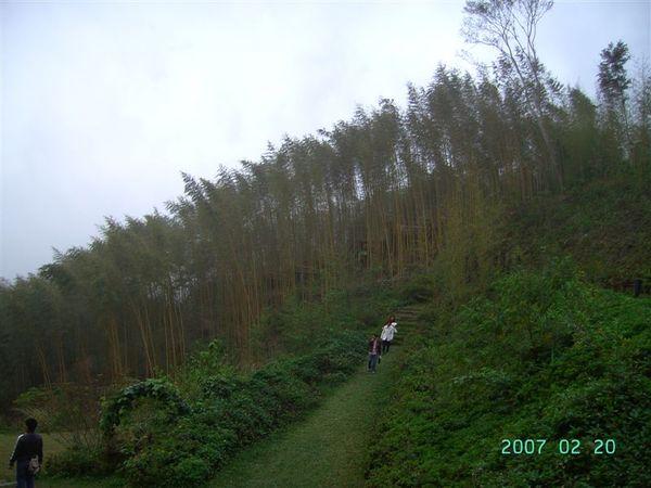 20070220-綠光森林竹林2.JPG