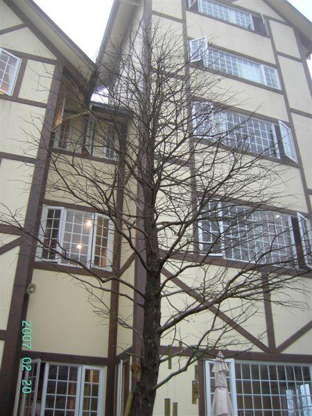 20070220-綠光森林枯樹.JPG