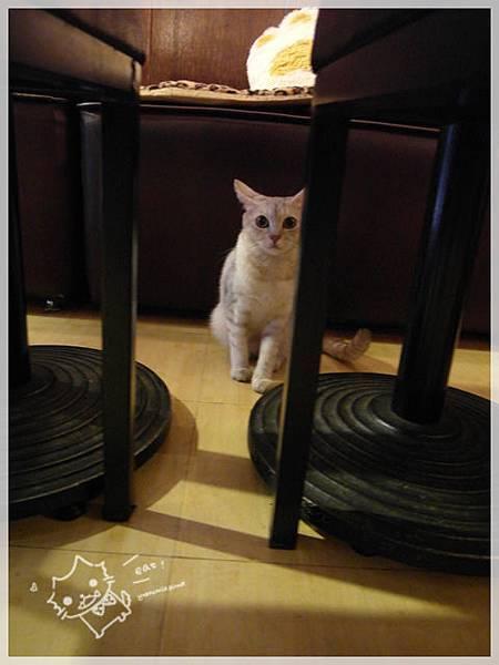 我最愛喵喵餐廳25.JPG