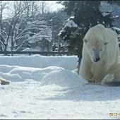 D4-旭山動物園058.JPG