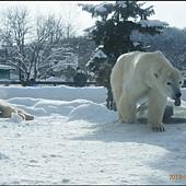 D4-旭山動物園061.JPG