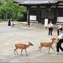 奈良公園010.JPG