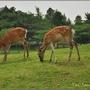 奈良公園024.JPG