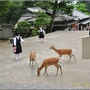 奈良公園008.JPG