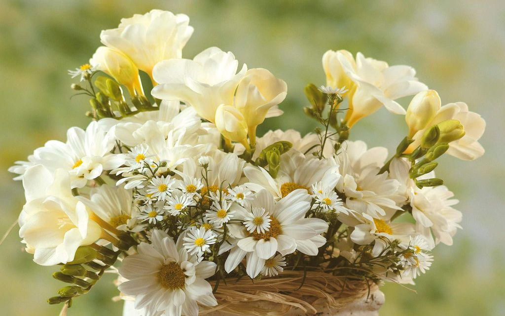 flowers-wallpapers-sweet-white-blooming-animated-beautiful-pictures-206319