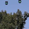 308px-San_Diego_Zoo_Skyfari_g...