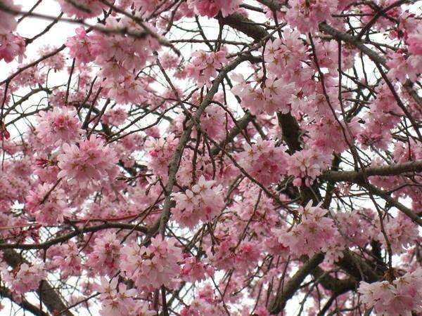 花團錦簇的味道