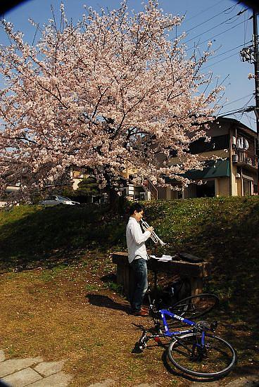 櫻花樹下吹喇叭...別有一番風情