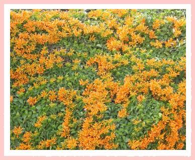 鄰居美麗的花簇