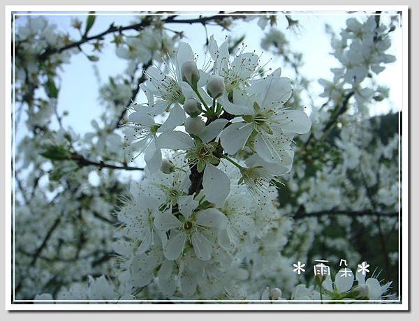 草坪頭賞花1