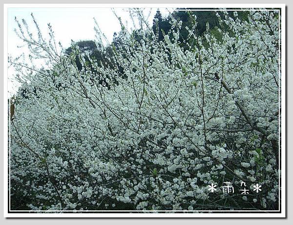 草坪頭賞花2