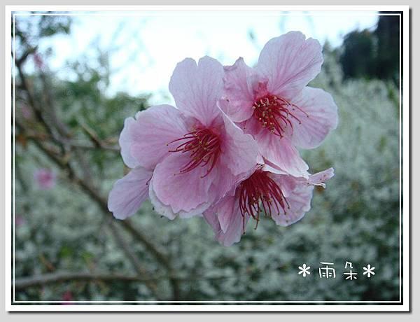 草坪頭賞花4