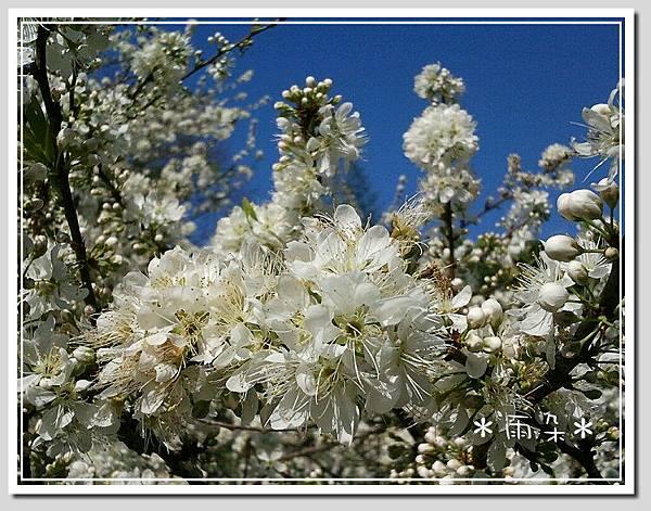 草坪頭賞花11