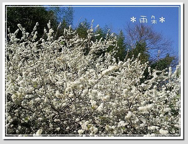 草坪頭賞花18