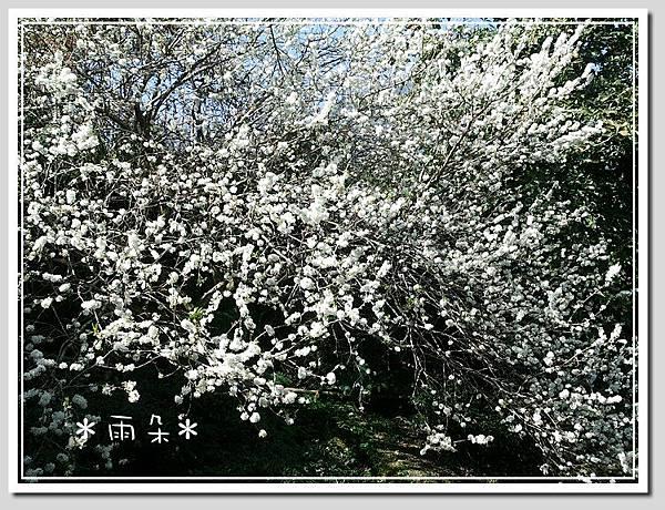 草坪頭賞花19