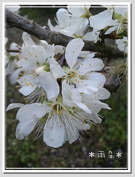 草坪頭賞花22