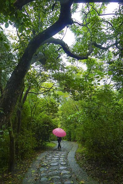 P1420597 仁山植物園