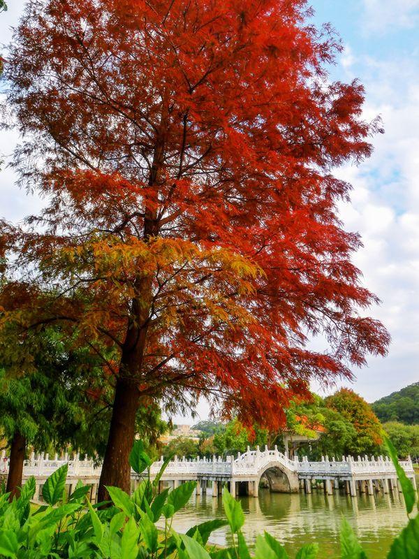 P1480976    碧湖公園_副本