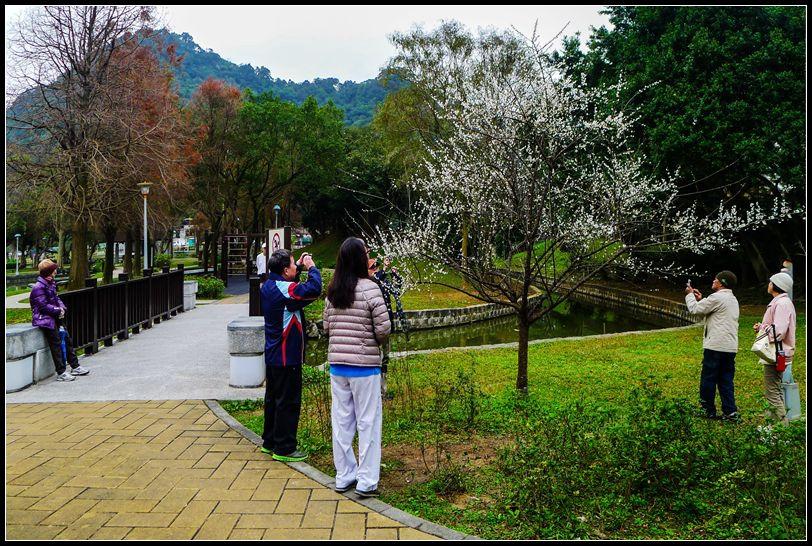 P1510535   AA_副本    大湖公園