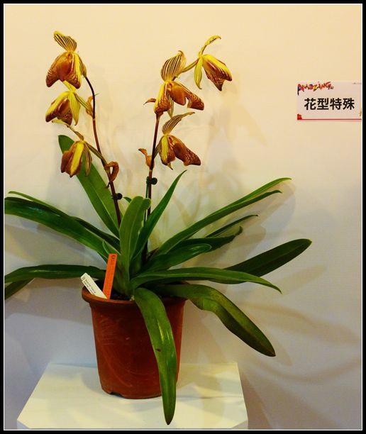 P1540574_副本  蘭花展