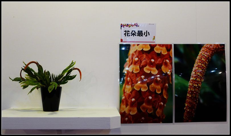 P1540559_副本  蘭花展