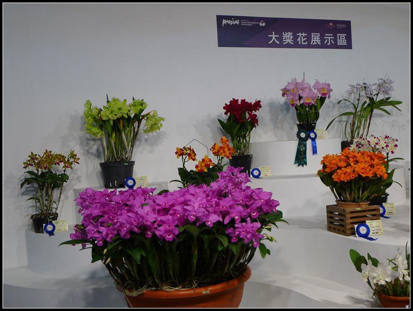 P1540557_副本  蘭花展