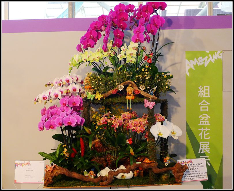 P1540501_副本    蘭花展~2.